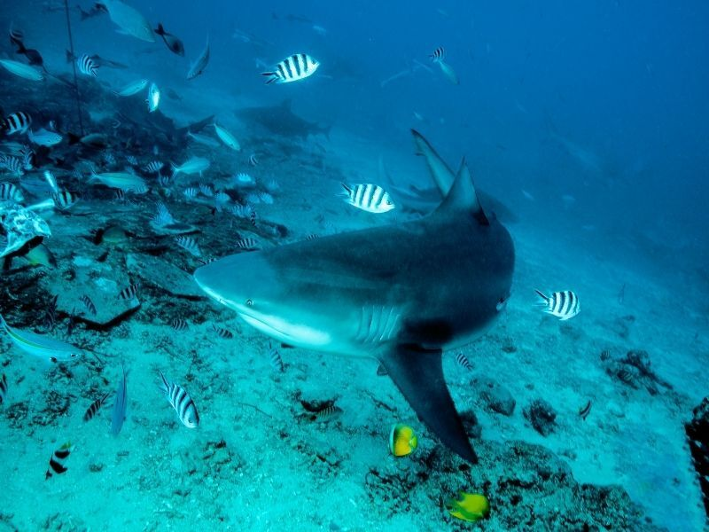 shark swimming in aquarium tank