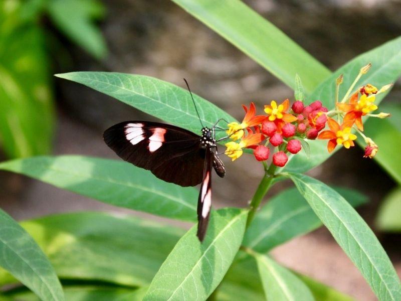 butterfly on flower at botanical garden