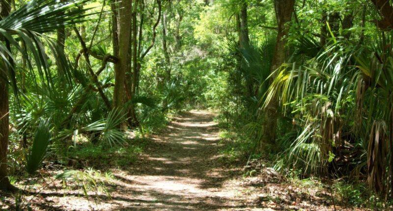 park walking path